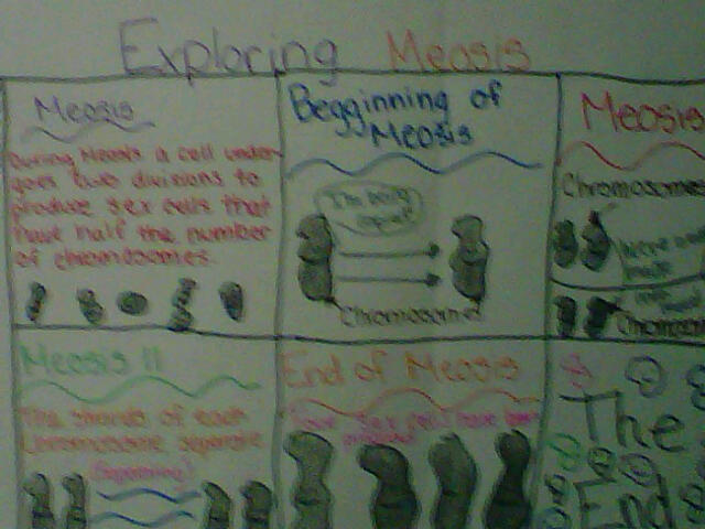 6th Grade Teacher Makes Science Fun with Cell Process Cartoons (2/3)